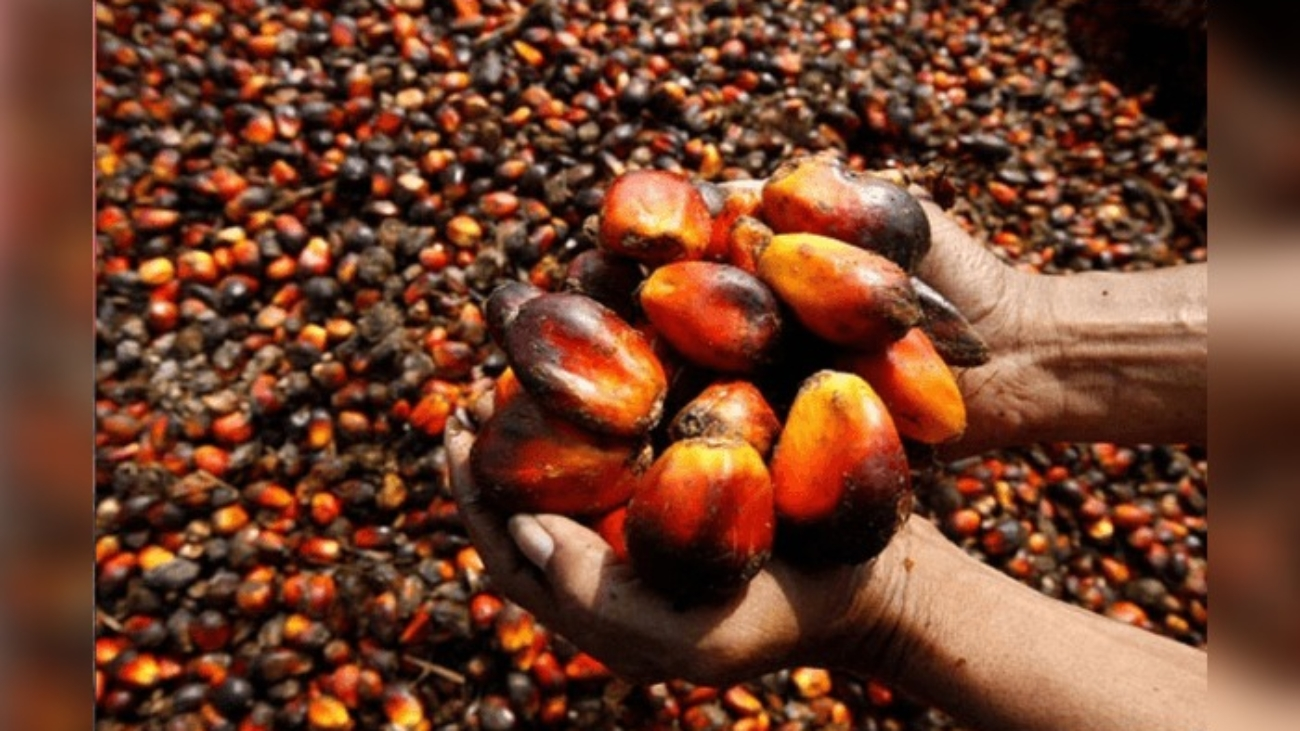 FG-to-create-4-million-jobs-from-oil-Palm-production