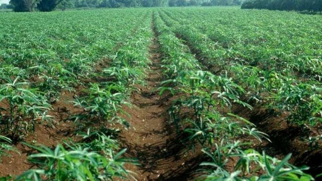 Agro-processing